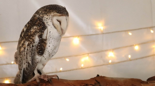owl-4529358_1280